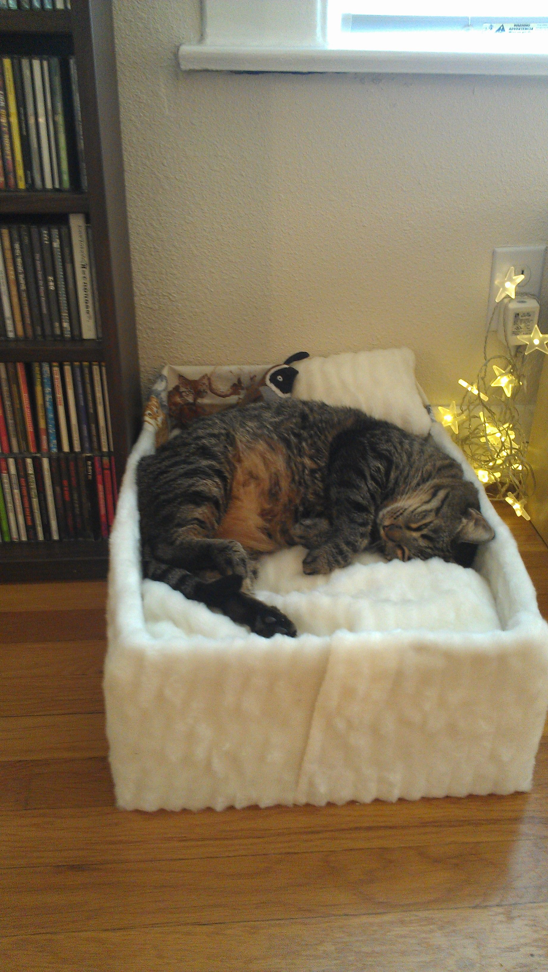 Window bed for cats   best images about kitty info on pinterest  cats indoor trees