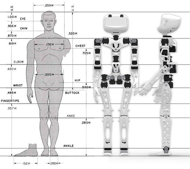 Blueprints show that poppys structure more closely matches up to blueprints show that poppys structure more closely matches up to a person than to robots malvernweather Choice Image