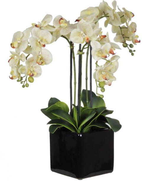 Orchid Fl Arrangements Wedding Flower Arrangement Ideas
