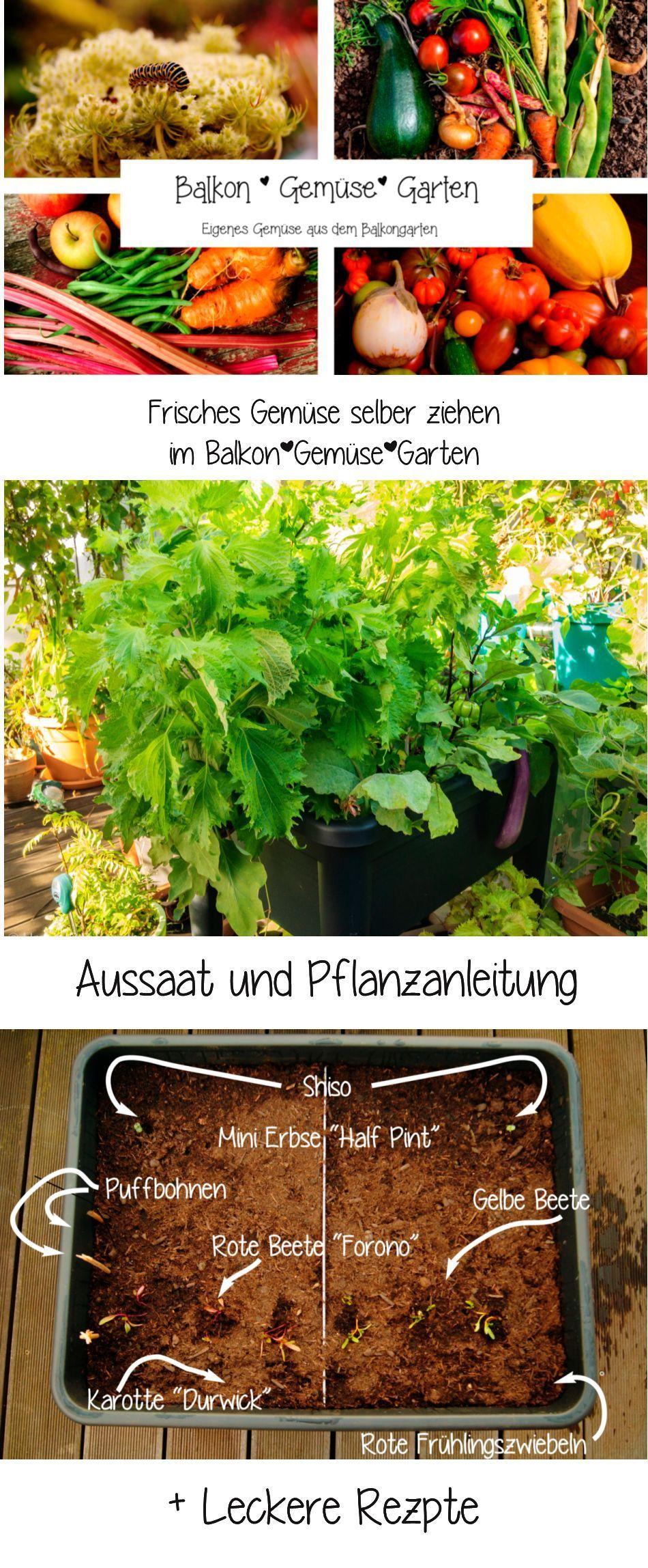 Ebook Balkon Gemuse Garten Saen Pflanzen Rezepte Anbauvongemuse Pflanzen Gemuse Anbauen Garten