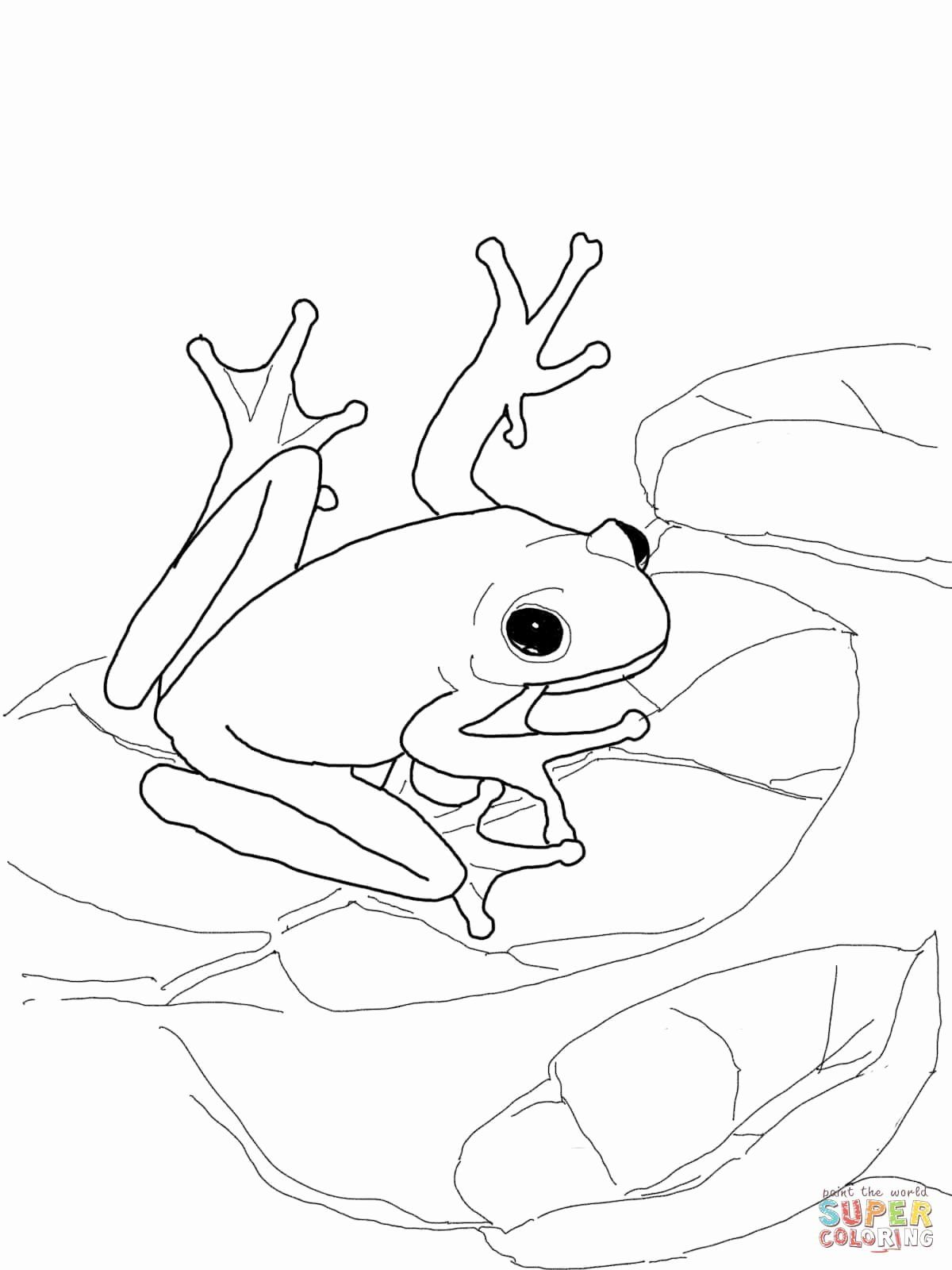 Tree Frog Coloring Page Unique Pin By Jj Dunagan On Bullets In