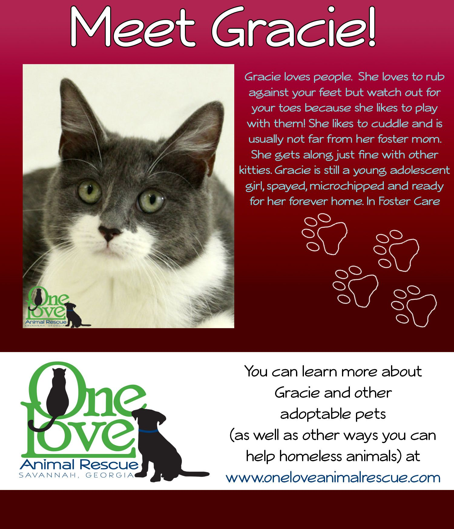 Please Submit Your Pre Adoption Application Online At Http Oneloveanimalrescue Com Pre Adoption Application To Schedule An Foster Mom Love People Adoption