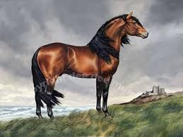 horse art - Google Search