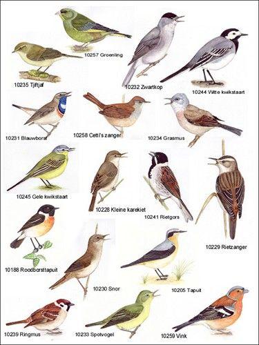 Wonderlijk soorten vogels spanje - Google zoeken | Aves, Animales RR-24