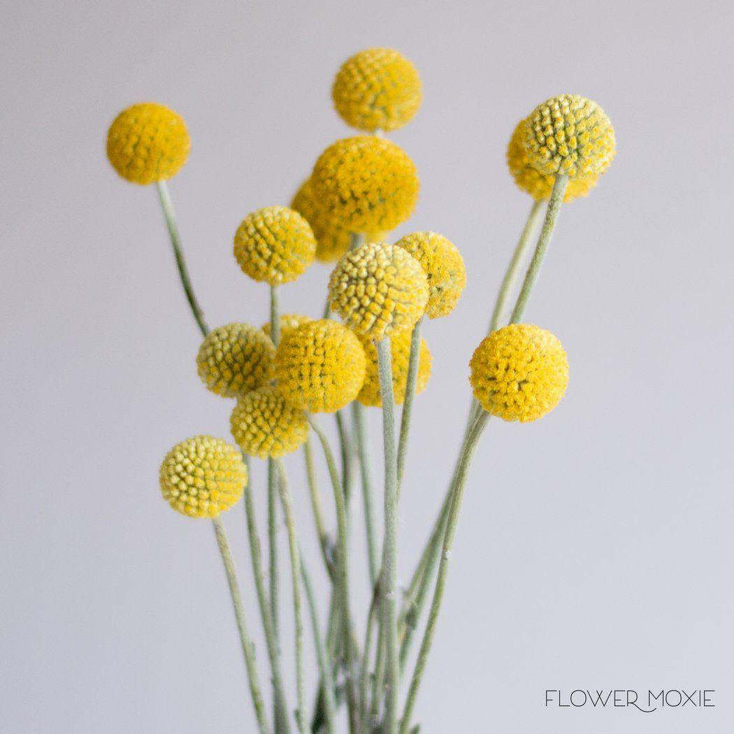 Billy Ball Flower Flower Centerpieces Wedding Simple Wedding Flowers Wedding Centerpieces