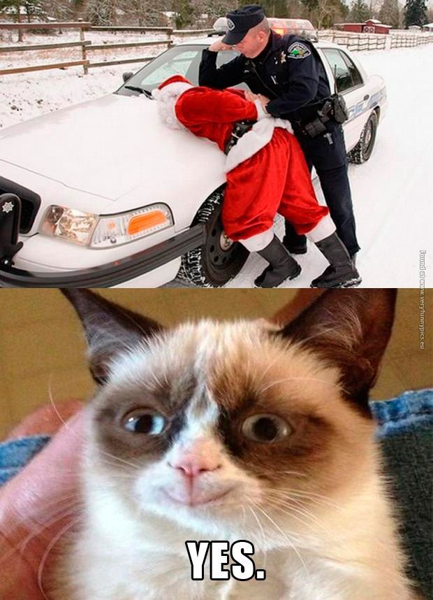High Quality Happy Grumpy Cat · Christmas QuotesChristmas ...