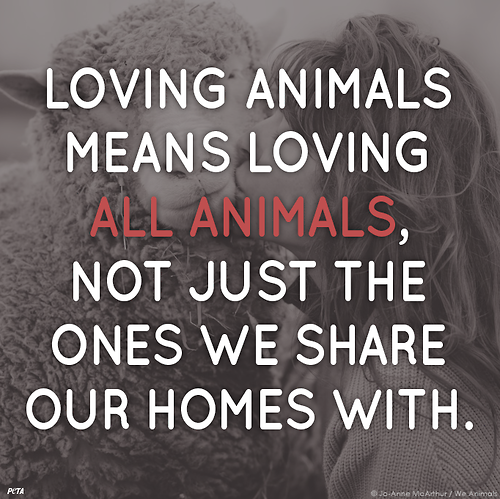 Love Animal Quotes Magnificent Loving Animals Means Loving All Animals Not Just The Ones We