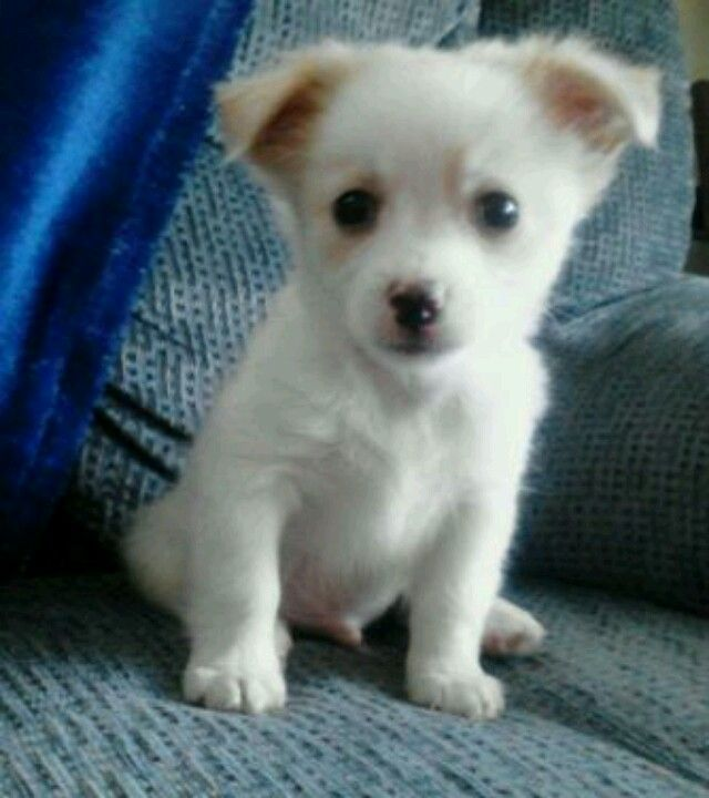My new pomchi