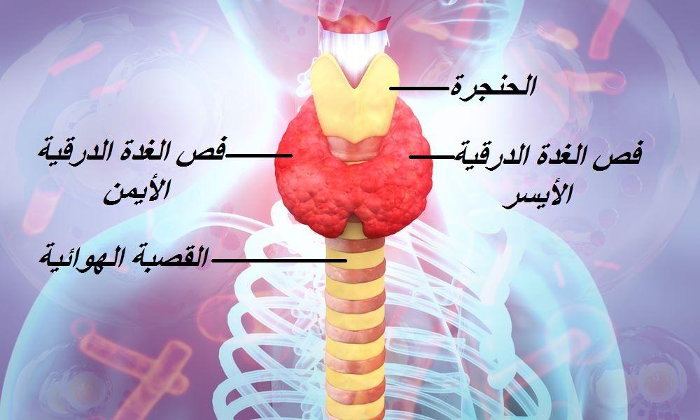 يعاني الكثير منا من كسل وقصور الغدة الدرقية وزيادة الوزن وصعوبة فقدان الوزن والعديد من الأعراض بسبب اضطراب إفراز هرمونات الغدة الدرقية Hypothyroidism Diet