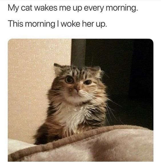 25 Funny Cat Pictures Any Cat Owner Will Recognize -