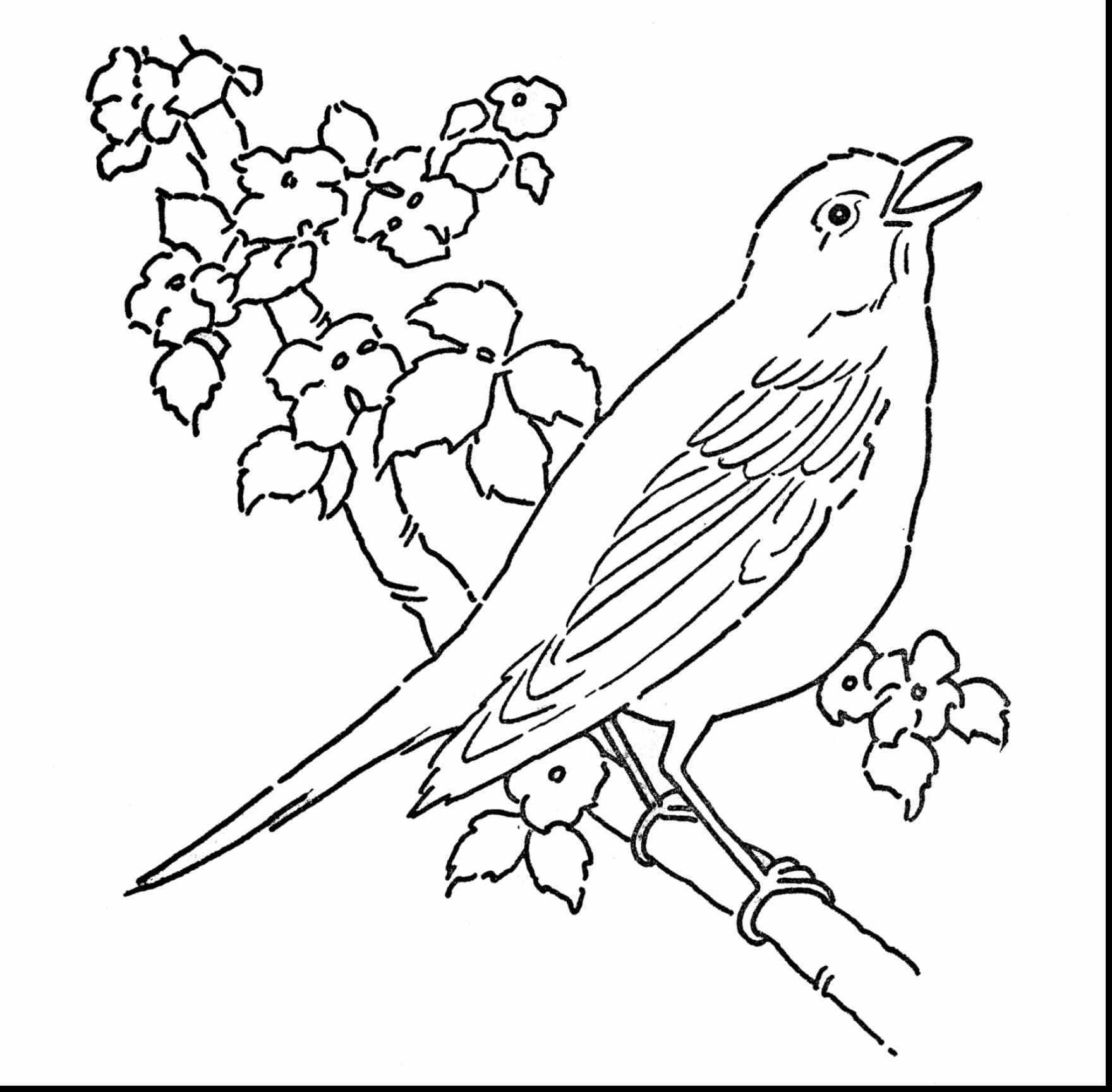 Vogel Malvorlagen Zum Drucken Von Frischen Amerikanischen Robin