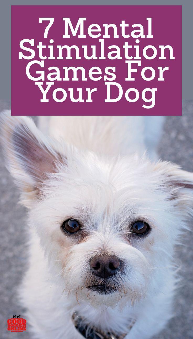 Brain Training For Dogs Dogs Training Your Dog Brain Training