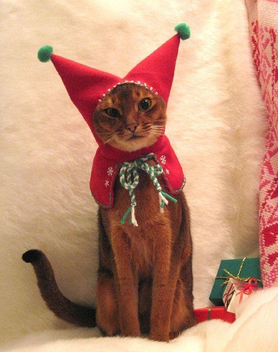Kittens Christmas Outfits u2013 20 Christmas Costumes For Cats | Cat and Animal & Kittens Christmas Outfits u2013 20 Christmas Costumes For Cats | Cat and ...