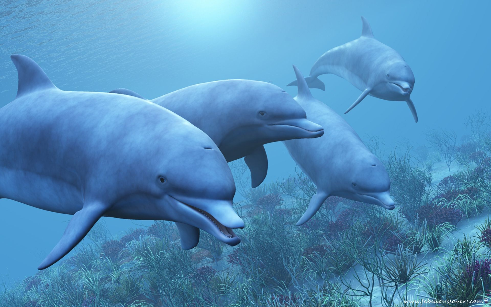 Pin by hdpicorner on Desktop Wallpapers Dolphins, Under