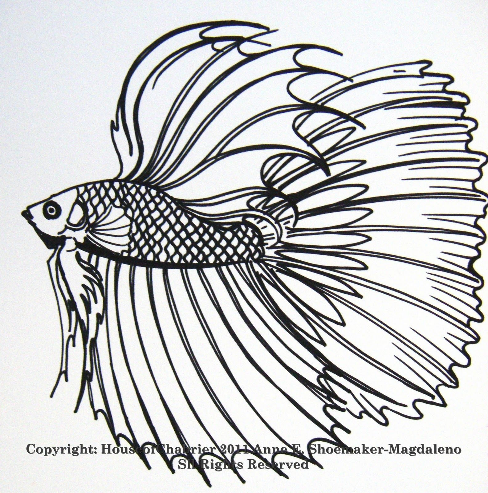 betta coloring Pages | here are some of my line fish drawings to ...