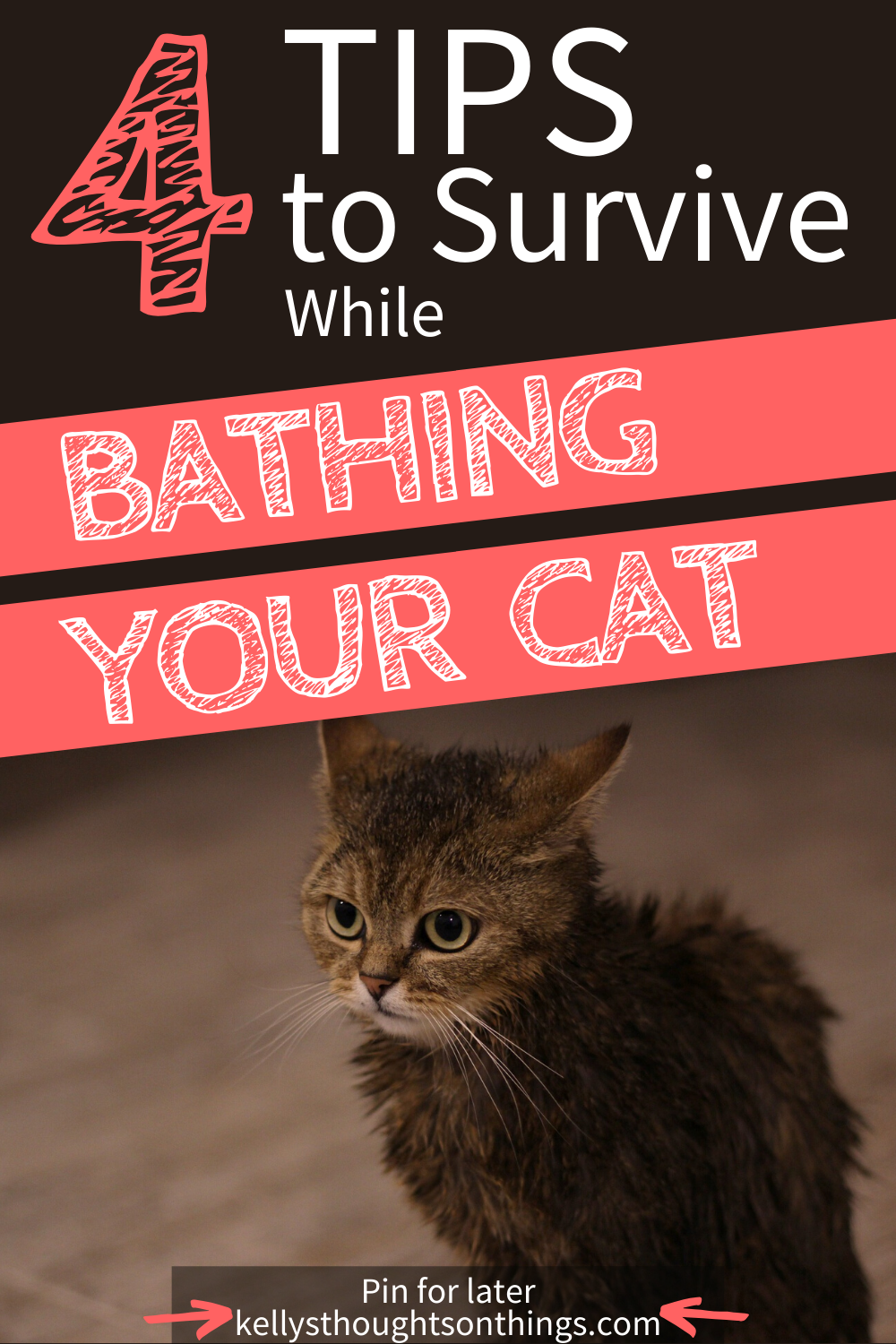 Tips For Bathing Your Cat In 2020 Cat Advice Cats Cat Behavior