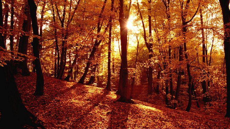 Autumn Forest Full Hd Wallpaper Desktop Wallpaper Fall Autumn Forest Forest Wallpaper
