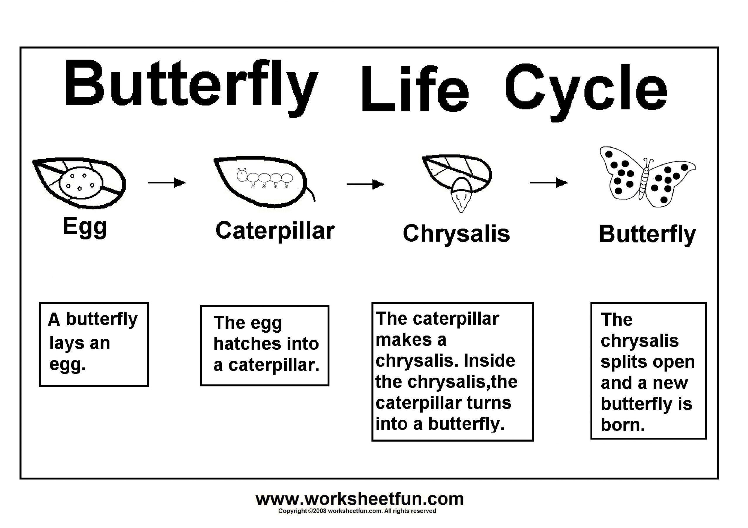 Butterfly Worksheets For Kindergarten 8 Kindergarten Wor