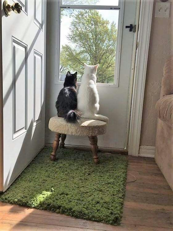 15 Cats Gazing Out The Window And Looking Cute