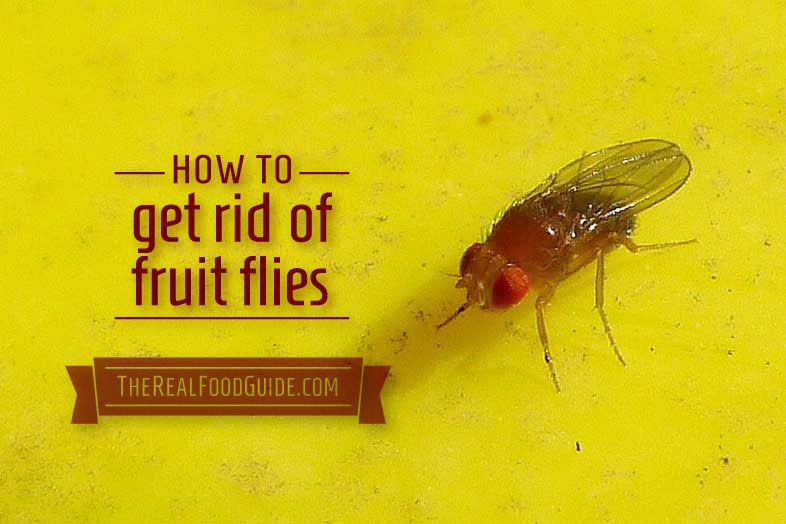 how to get rid of fruit flies fast the real food guide health wellness posts pinterest. Black Bedroom Furniture Sets. Home Design Ideas