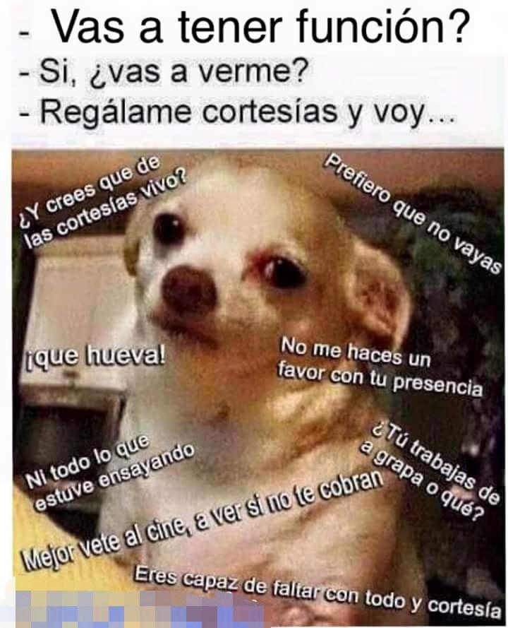 Pin De Ixel Rosales En Animales Graciosos Perro Enojado Memes Imagenes De Humor