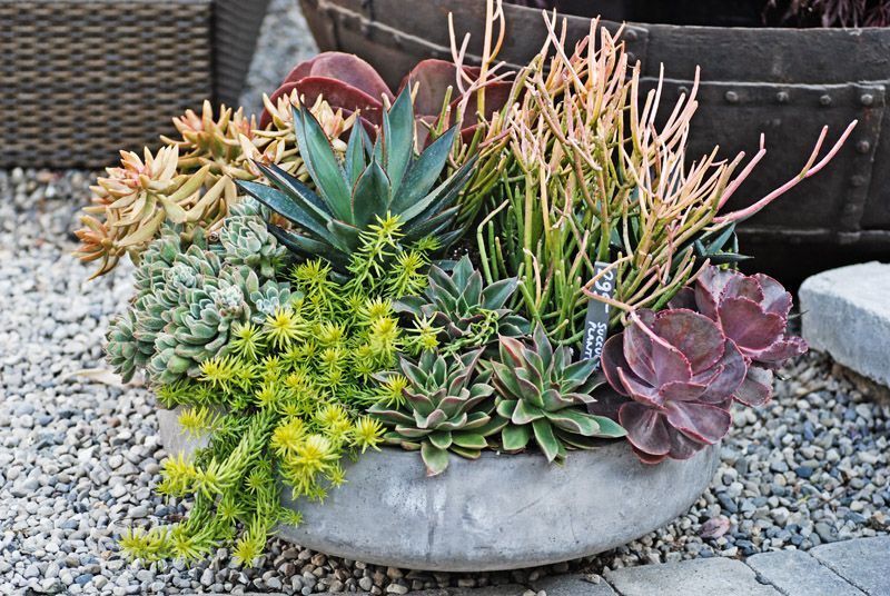 It 39 s hot and dry add a locally grown succulent bowl to for Succulent dish garden designs