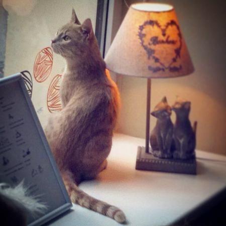 Minka Cat Cafe