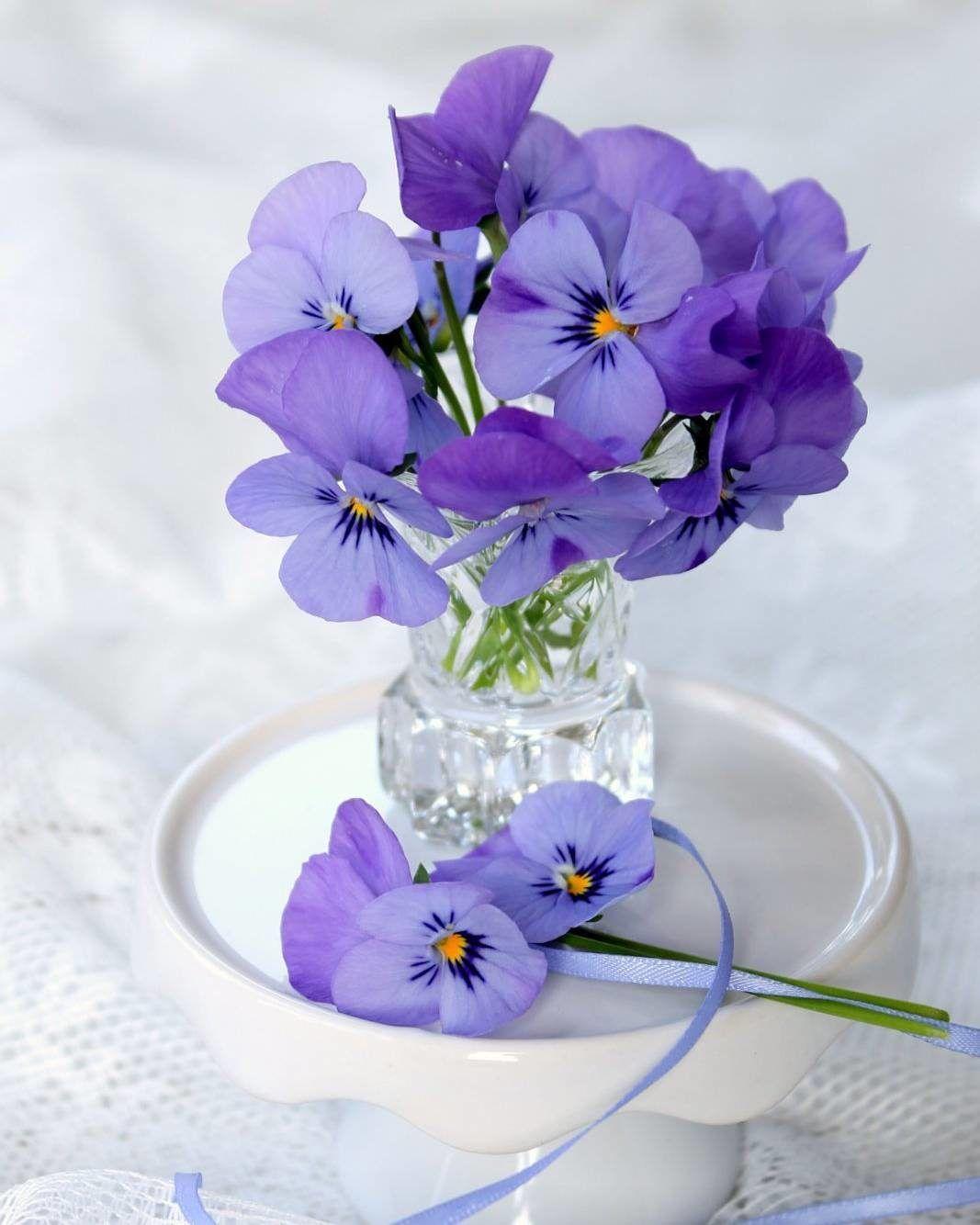 ...Ищите КРАСОТУ...в простых ВЕЩАХ:.. | Цветы, Красочные ...