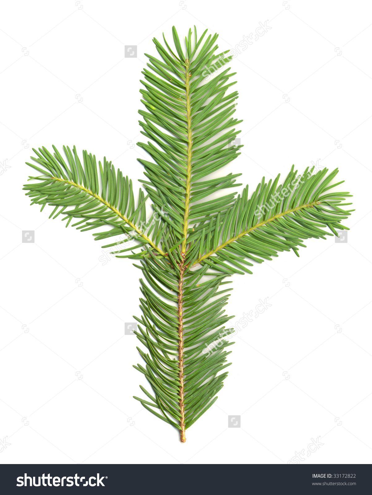 Douglas Fir Christmas Tree Stock Photos, Images, & Pictures