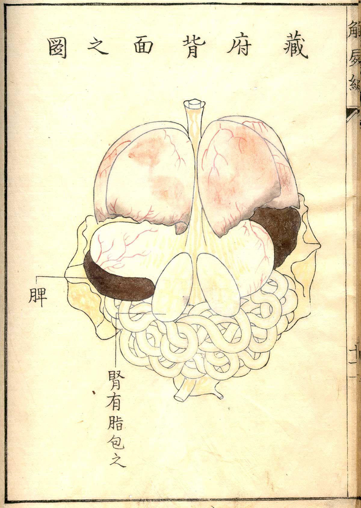 kawaguchi_p11r.jpg 1,200×1,691 pixels | limbo | Pinterest | Anatomy ...