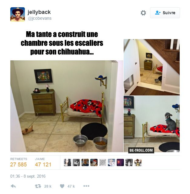 ma tante a fait une chambre pour son chien be troll vid os humour actualit insolite. Black Bedroom Furniture Sets. Home Design Ideas