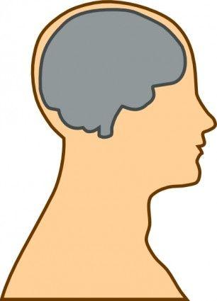 Download Free Medical Clip Art | Medical Diagram Of Brain clip art ...