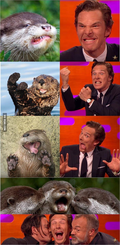 Otters Benedict Cumberbatch Cute Animals