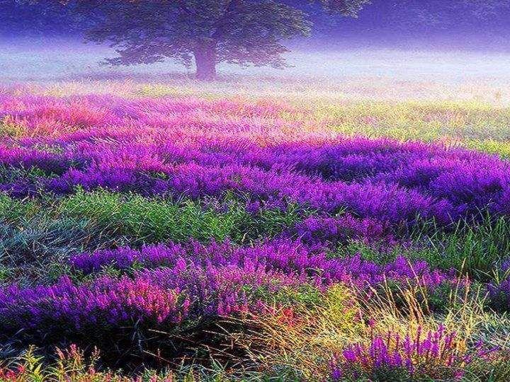 Flower meadow.
