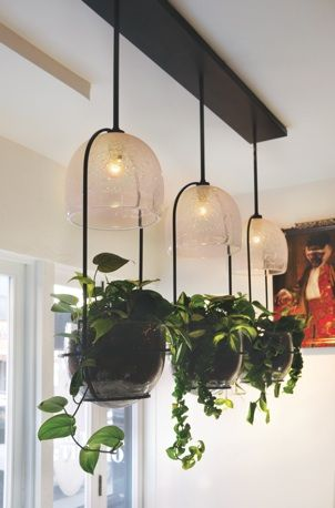 Carmen Salazar's grow light.  Playing with plants, lights and food.