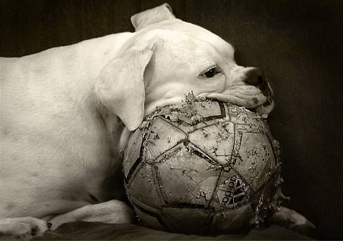 Mine loves soccer balls and lays her head on everything like this too.  So sweet!