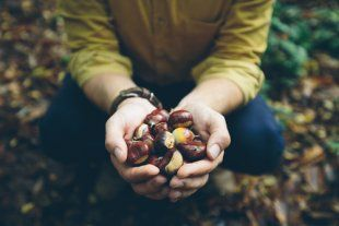 10 Reasons You Should Start Foraging for Your Own Food | Alternet