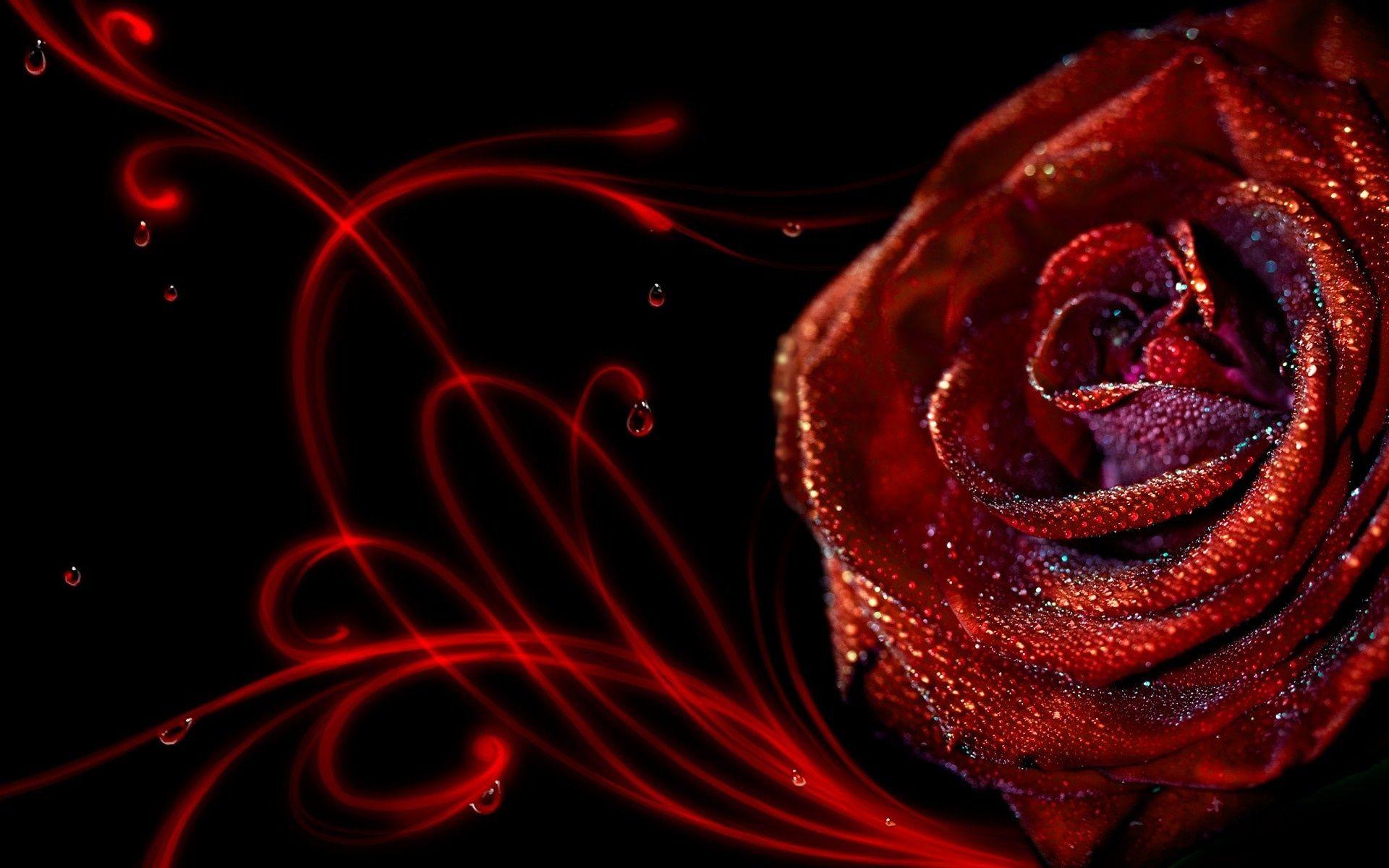 Wallpaper HD 3d Flower Rose