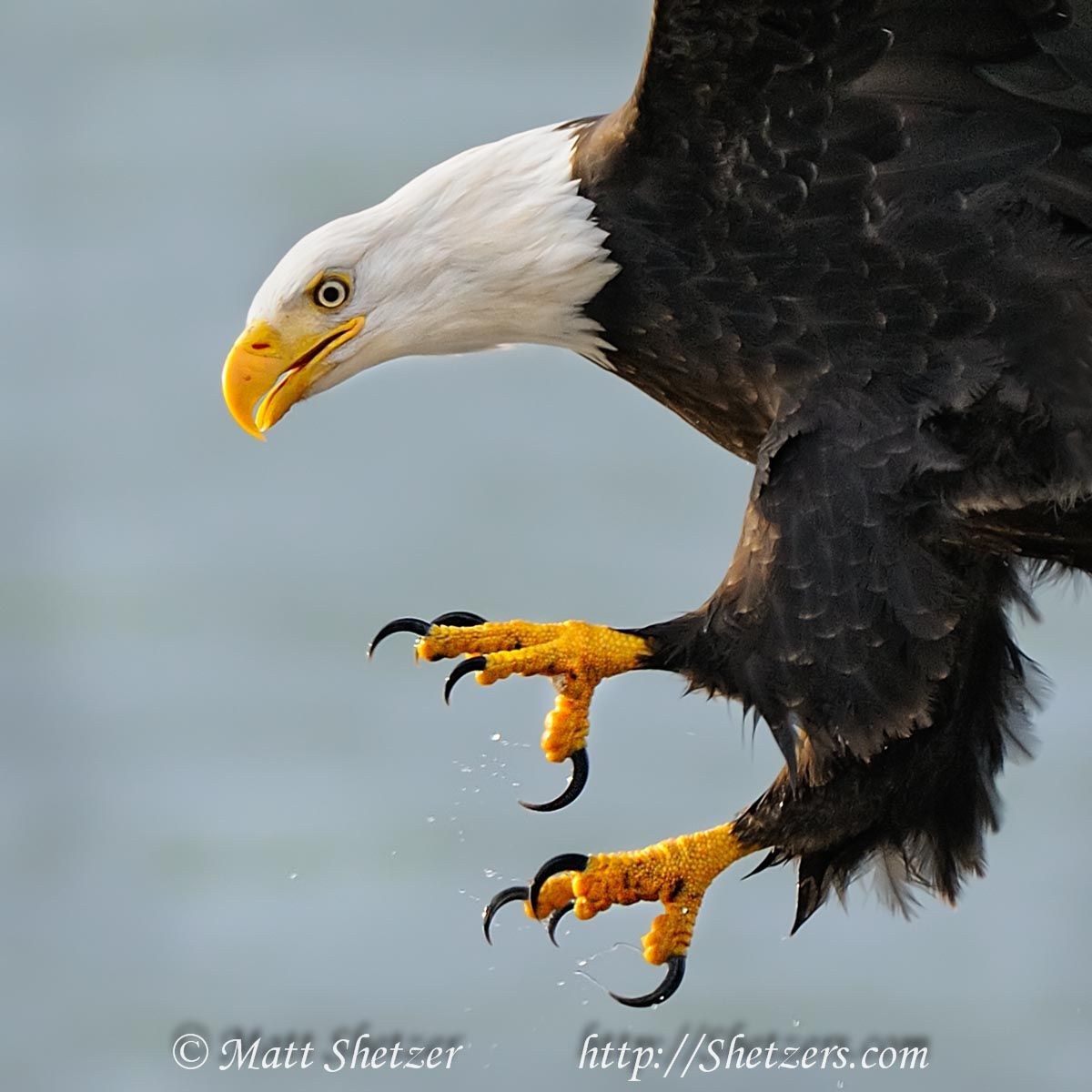 Those remember about the terrible hybrid, Eagle with a lion vdru 87