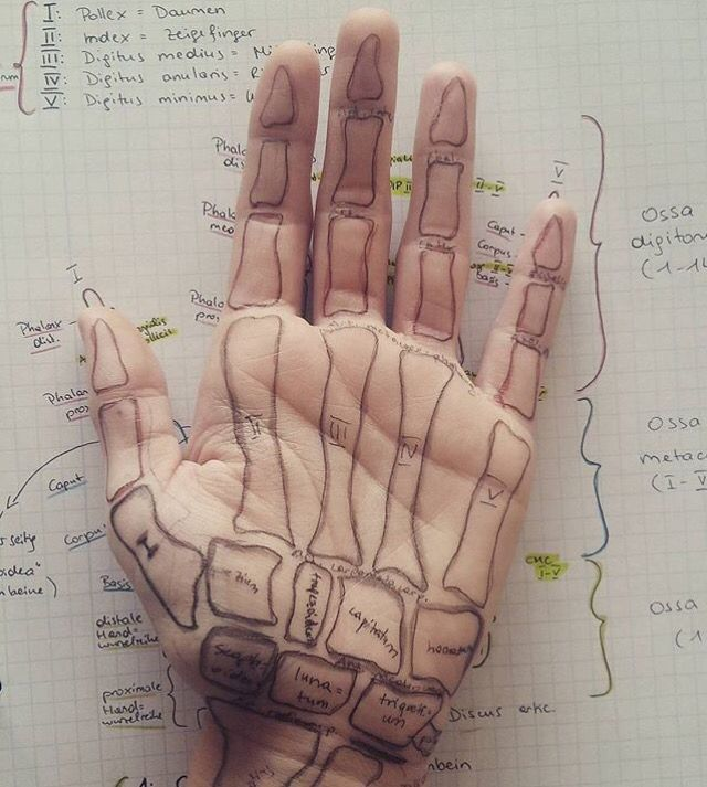 The Anatomy Of The Hand Drawing Pinterest Anatomy
