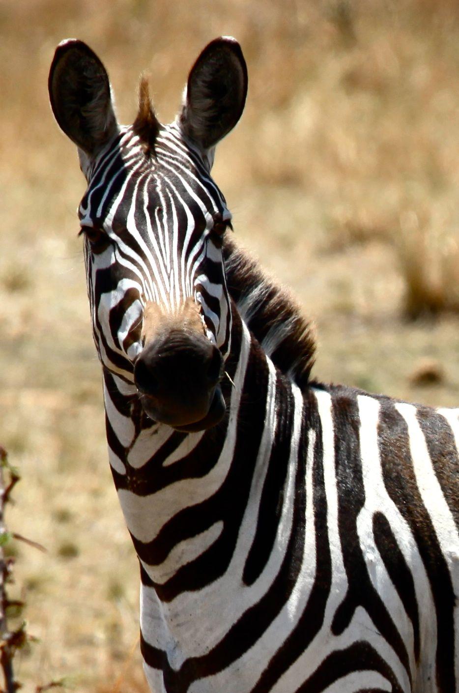 Be original! (No 2 Zebras have identical stripes
