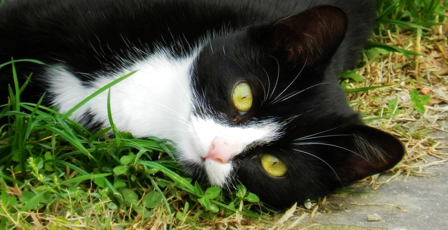 Cute Black And White Cat Cute Cats And Kittens White Cats Cats