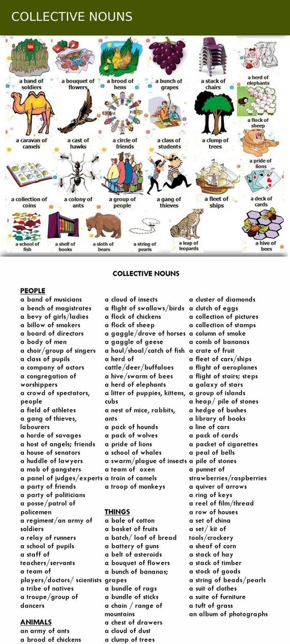 Collective Nouns Group Words For People Animals And