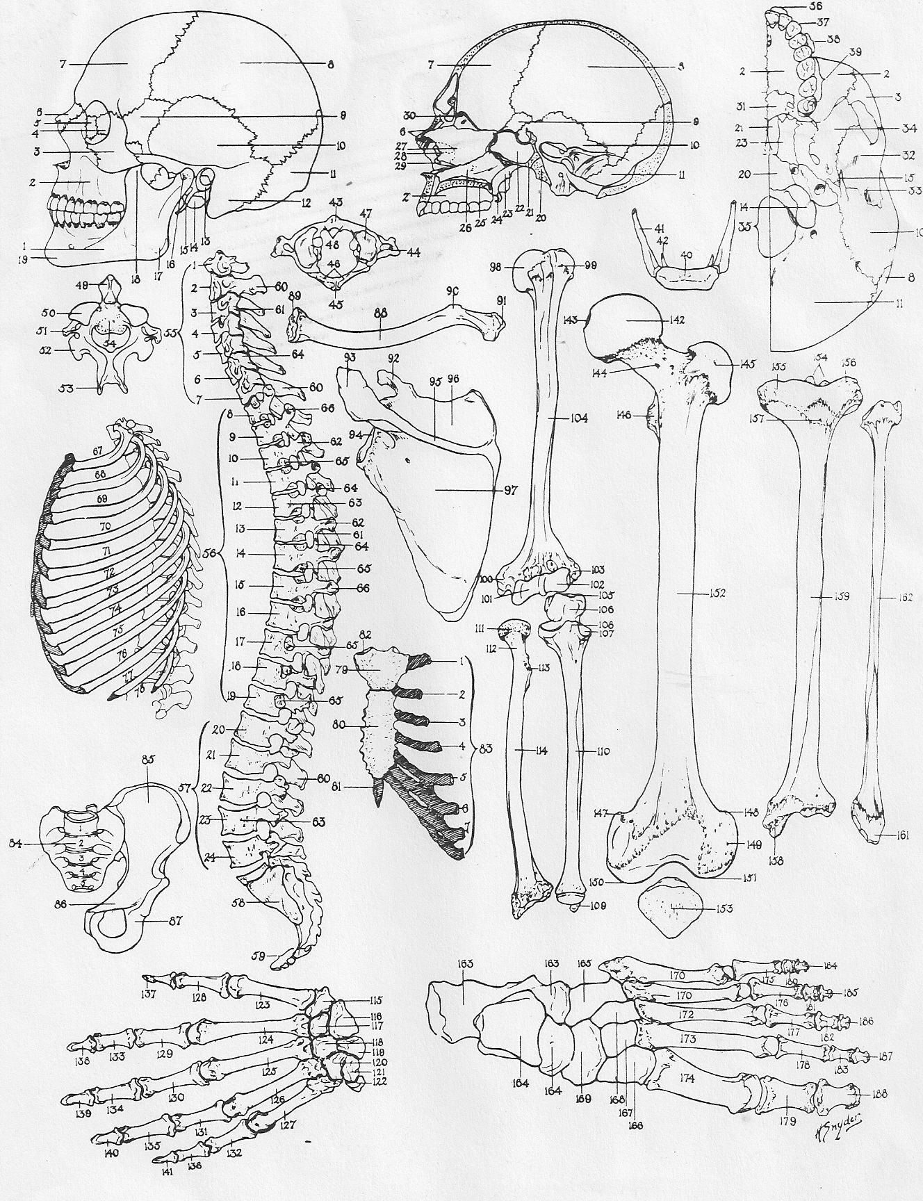 Pin by Kim Pozza on Mini books and printables | Anatomy coloring ...