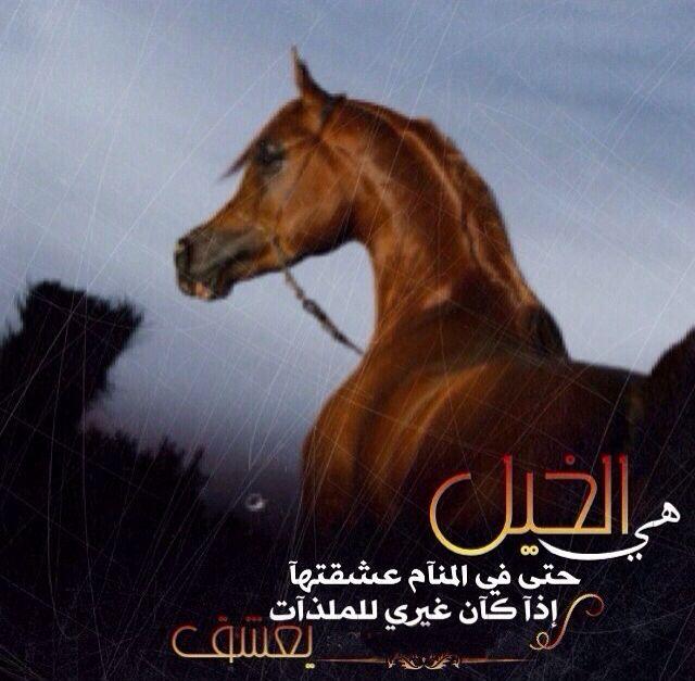 Pin By ʝɛɛɬɛƙ Al3nzii On عشق الخيل Expressions Animals Words