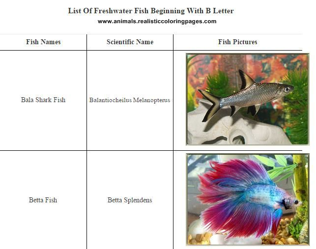 3 letter animal names list picture gallery
