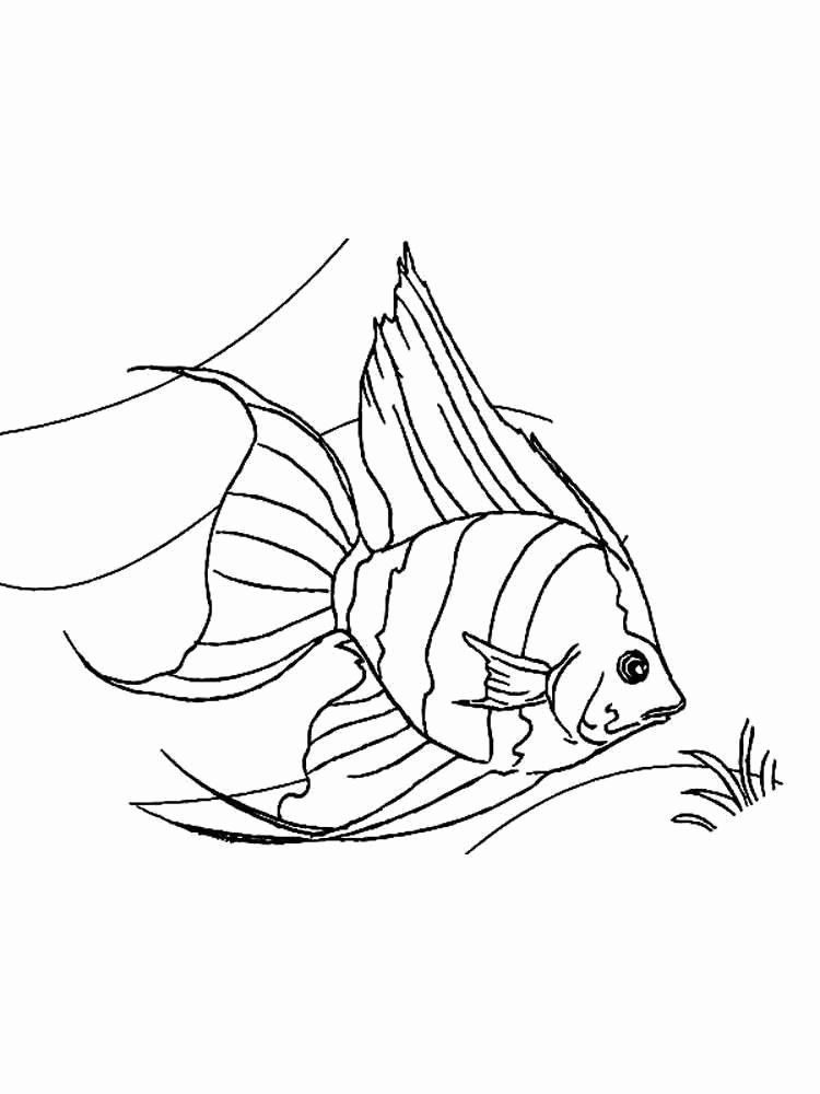 Angel Fish Coloring Page Awesome Angelfish Coloring Pages Download And Print Angelfish In 2020 Animal Coloring Pages Fish Coloring Page Unicorn Coloring Pages