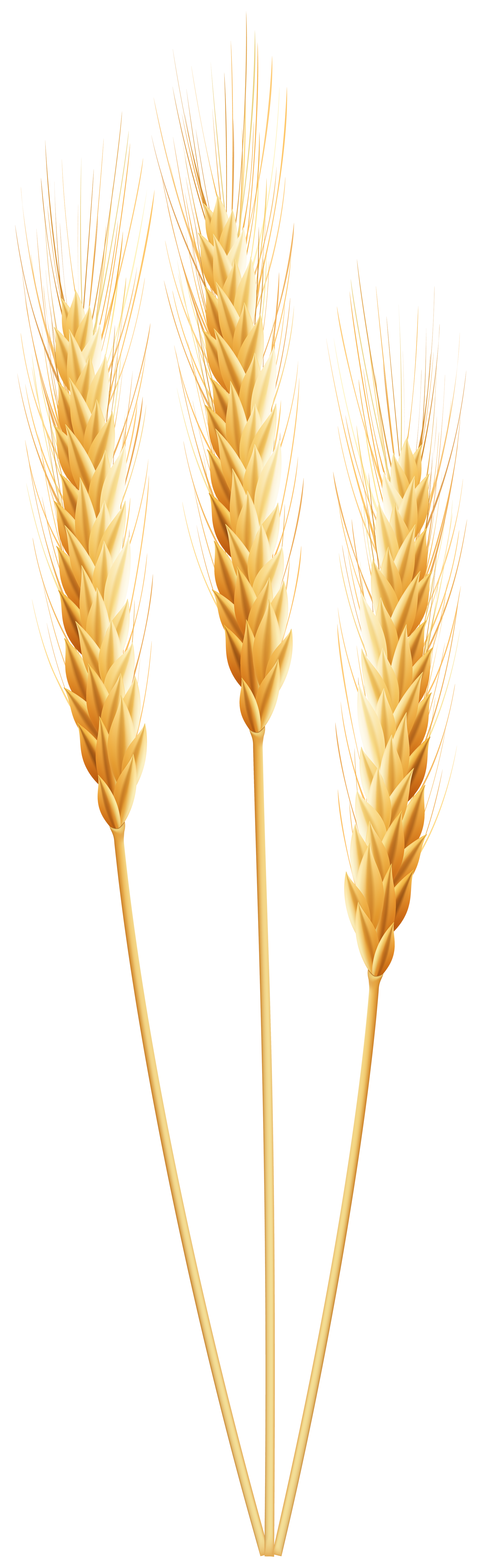 Wheat Png Clip Art Leaves Illustration Illustration
