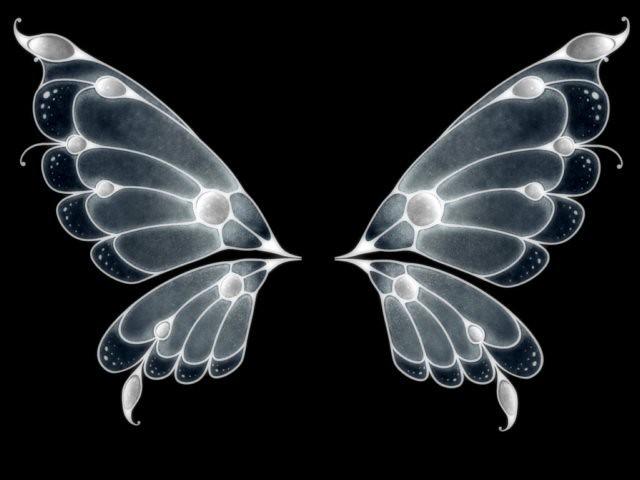Wings Wings Wallpaper Butterfly Wings Wings Drawing