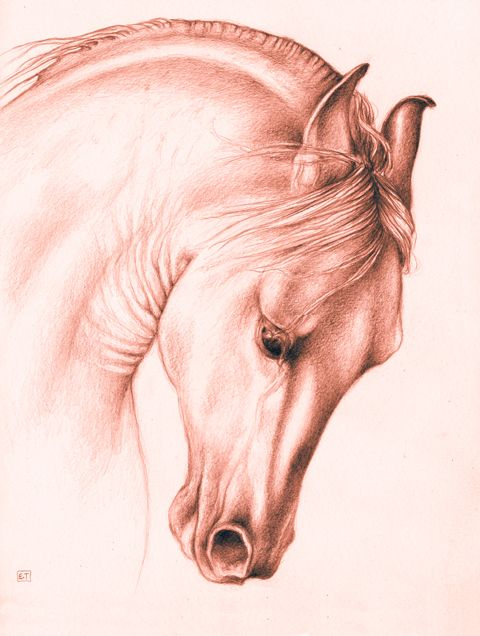 Original Andalusian Horse drawing by Evey Studios..products with this artwork can be seen at: http://www.cafepress.com/eveys/11100825